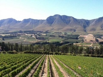 7wineroutes-hermanus