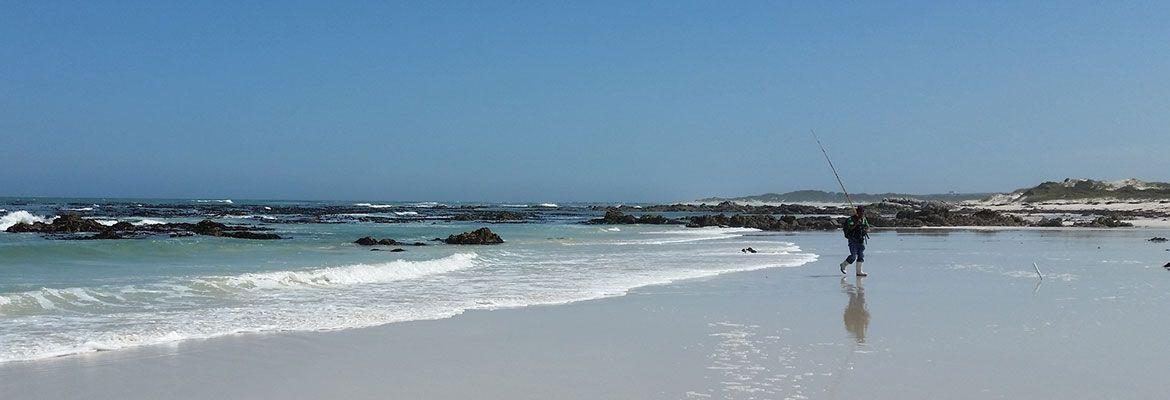 hermanus activities